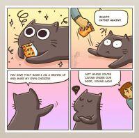 Kissasarjiskokoelma