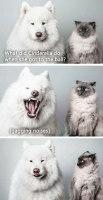 Koira kertoo vitsin