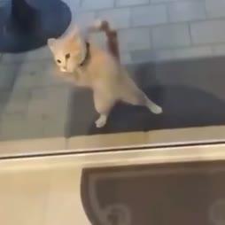 nopea ikkunanpesijä