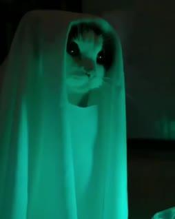 ku ku kummitus :3