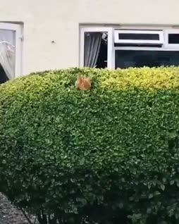 kissapuska