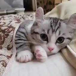 ♫ soft kitty, warm kitty, little ball of fur ♫