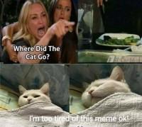 Väsy kissa