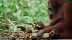 Apina töissä