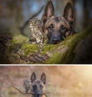 Pöllö ja koira