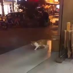 Kisse kuukävelyllä