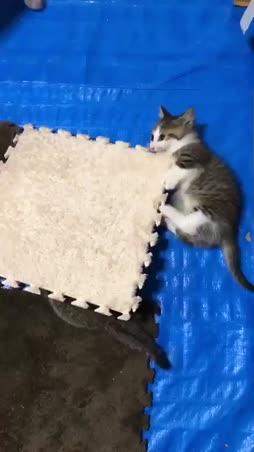 neliö ja kissanpennut :3 :3