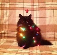 hyvää joulua :3