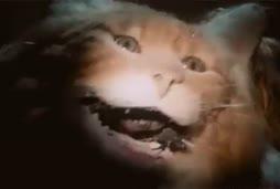 Näin kissat syntyy