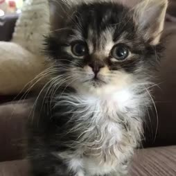 tiny mew
