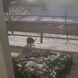 Koiran kakka pyörii