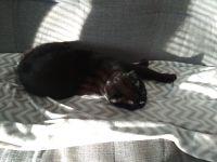 Maikki nauttii auringosta :3