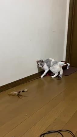 omavarainen kissa :3