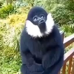 Apinalla on asiaa