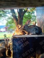Viime kesän kanit