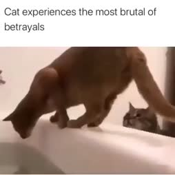 Autan sinua peseytymään >:3
