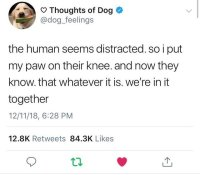 Thought of dog
