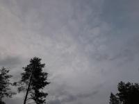 Suopursu taivaalla, natinkia