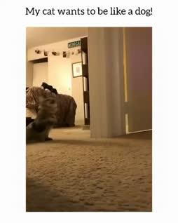 kissakoira