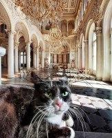 Eremitaašin kissoja 3