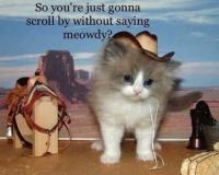 Meowdy pardner