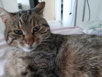 Are you kitting me? Heräile keskenäsi huumon >:3