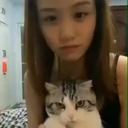 miten traumatisoida kissa