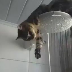 suihkuavustaja :3