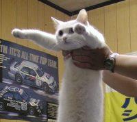 RIP longcat ;__;