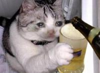kissen päikkärit