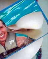 Iloinen delfiini