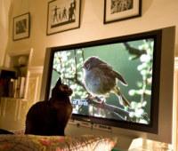 Kellotamme tv:tä - kokoelma