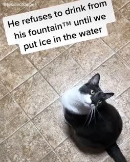 Tarvitsen arvoistani vettä :3
