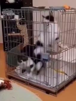 kissojen kiertokulku