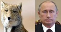 Putin on tiibetinketttu