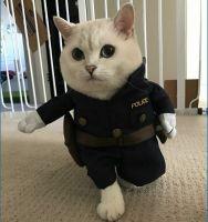 poliisi :3