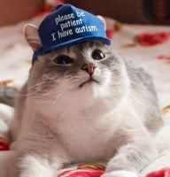 Sonjan kissa Sonja