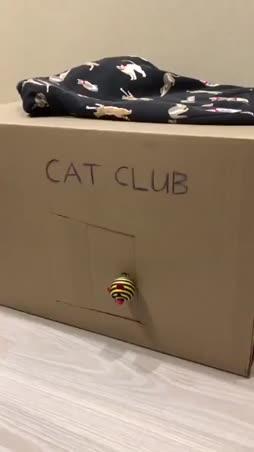 Cat club :3