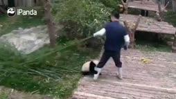 Panda, perkele!